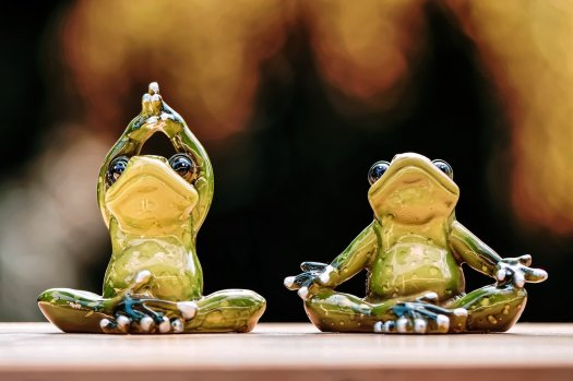 frogs-5088767_1280
